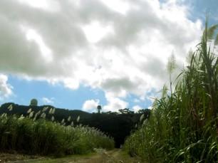 Campos de caña de azúcar de Yoza, Itoman.