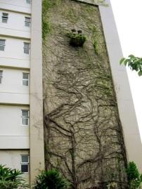 Facultad de Derecho de la Univ. de Ryukyu
