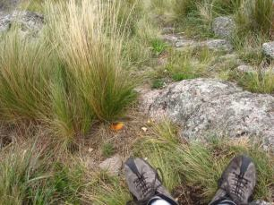 Mis doloridos pies