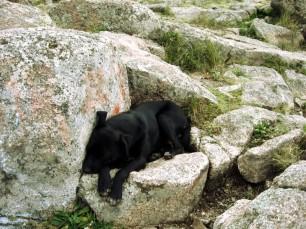 Perro durmiendo en la cima de la montaña :-?