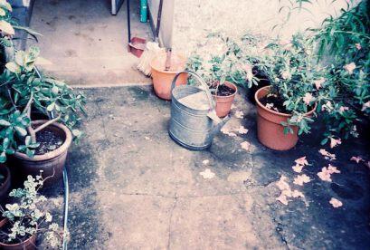patio de la casa de mi abuela