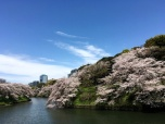 Chidori-ga-fuchi, Tōkyō