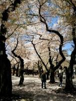 Yasukuni, Tōkyō