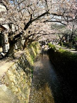 Hacia Gingakuji, Kyōto
