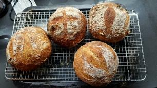 Después de meses fallando con los panes, ahora salen algo más decentes